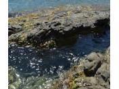 mare Mazzaforno