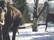 vodka salva elefanti freddo siberiano
