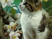 Elenco alcune piante velenose tossiche gatti