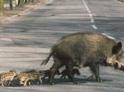 Soccorso obbligatorio agli animali