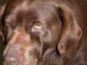 Ipotiroidismo cane: consulenza line