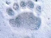 L'orso svegliato botti capodanno: passeggiata sulla pista