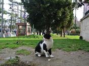 Istanbul, città gatti city cats