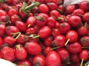 Gelatina Bacche Rosa Canina Sciacchetrà delle Cinque Terre