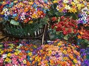 confetti Sulmona sempre considerato buon auspicio, viene tradizionalmente offerto occasione ricorrenze speciali.