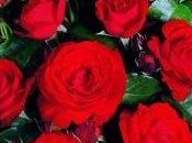 Significato rosa