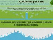L'idroponica, coltivazione fuori suolo: un'infografica