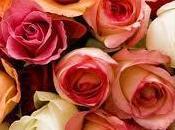 rose Valentino? Equosolidali molto belle
