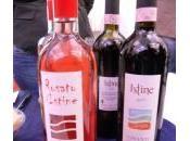 Produttori vino luce Sangiovese Purosangue