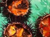Café Turin Nizza. Ostriche, frutti mare crostacei freschi volontà!