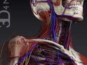 Recensione: Essential Anatomy, corpo umano tridimensionale secondo 3D4Medical