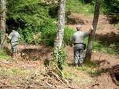 Denuncia della Forestale «Sul Gargano opera mafia legname»