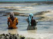 Zanzibar (Tanzania /Raccoglitrici alghe rischiano perdere lavoro