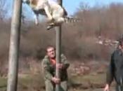 """""""Video""""Terribile rituale fatto cani divertimento."""