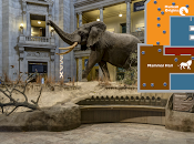 Musei virtuali: visita allo Smithsonian National Museum Natural History