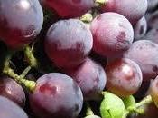 Vinitaly: calo vendite vini supermercato. Miglioramento bottiglie fascia alta