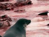 Protesta globale: fermiamo barbara uccisione delle foche canadesi vendita della loro pelliccia