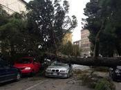 Enna, feriti viale Diaz. vento sradica pino maestoso