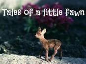 TALES LITTLE FAWN photography