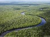 Greenpeace: foreste nostra vita