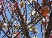 Strani alberi Francisco