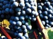 Vezzolano fede vigne Albugnano