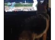 cane vede partita baseball alla prova afferrare palla (video)