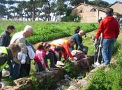 Riprendiamoci roma insieme movimento stelle ripulire parco pineto defiggere manifesti abusivi primarie david sassoli