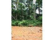 Quegli incentivi salvano foreste