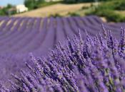 Provenza fiori colori