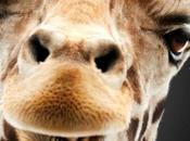 Anche povera giraffa character poster Notte Leoni
