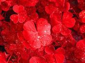 flower power: viaggio colori Part