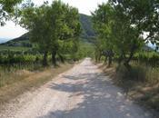 Veneto parchi: viaggio doline, vigneti lagune