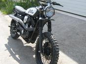 "Harley Sportster ""Scrambler"" Devils Custom"