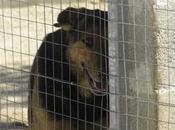 Giappone/ Cani sterminati nelle camere gas. Clamorosa denuncia dell'Enpa
