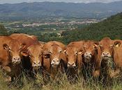 Mugello giorni sarà capitale dell'agricoltura toscana