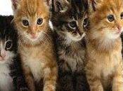 Omeopatia veterinaria: borse studio giovani medici veterinari