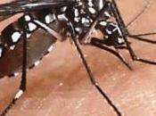Sardegna: aumentano zanzare tigre