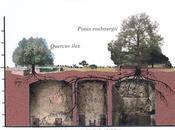 """cantiere della domus aurea"""", blog pregio"""
