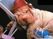 Come dorme (?!) sindaco Biundo