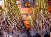 PELLE SECCA: maschera miele lavanda