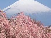 Buon vecchio Monte Fuji!!!!