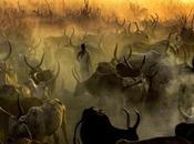 Dinka legendary cattle keepers sudan