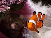 Povero Nemo….