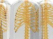 Spine Vodka: visual concept
