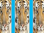 L'indifferenza delle tigri