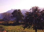 Sapori luoghi Trentino, Strade Vino