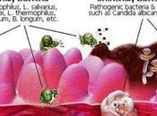 Come purificare flora intestinale maniera naturale alimenti