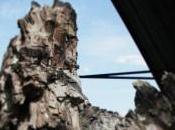 Scatti dalla foresta fossile Dunarobba
