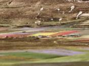 dono della fioritura nella piana Castelluccio